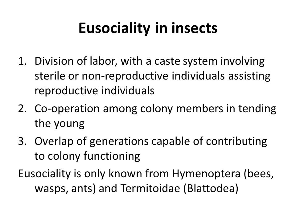 Eusociality in insects