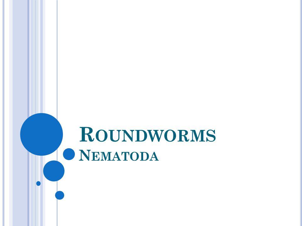 Roundworms Nematoda