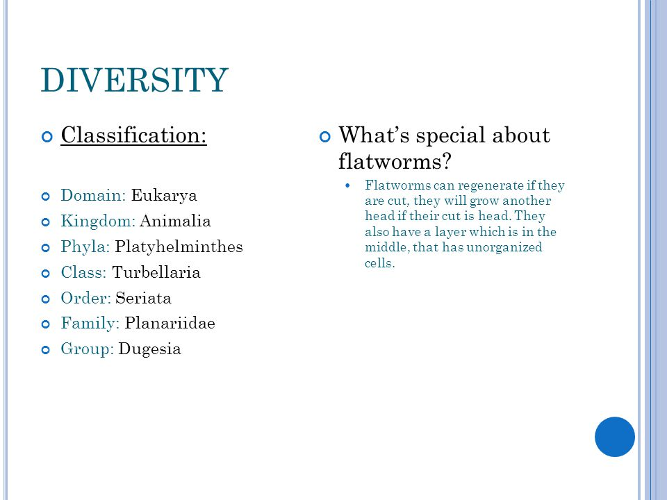 diversity Classification: What's special about flatworms