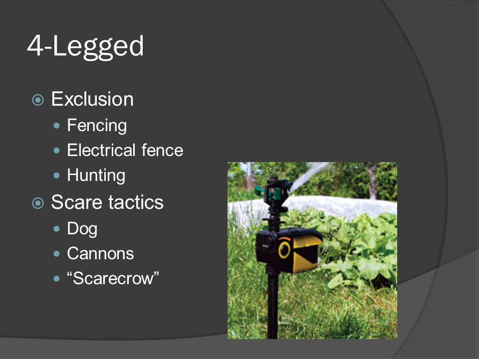 4-Legged Exclusion Scare tactics Fencing Electrical fence Hunting Dog