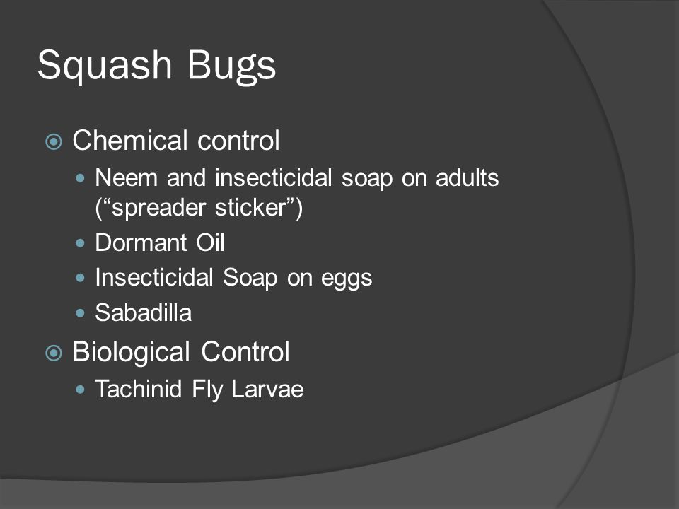 Squash Bugs Chemical control Biological Control