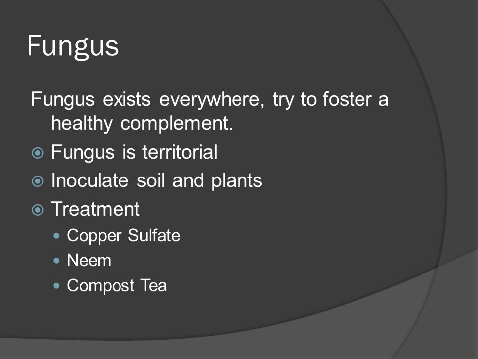 Fungus Fungus exists everywhere, try to foster a healthy complement.