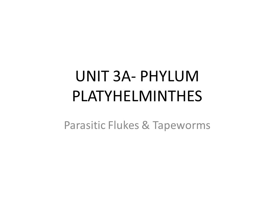 UNIT 3A- PHYLUM PLATYHELMINTHES