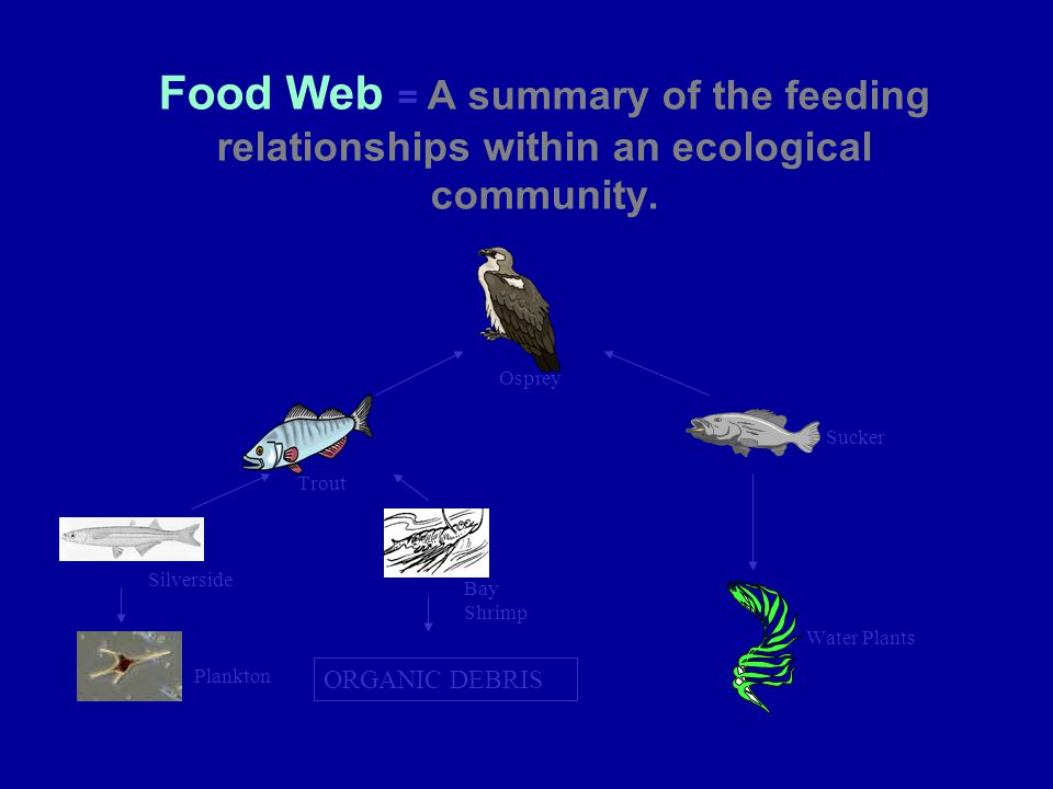 Food Web = A summary of the feeding relationships within an ecological community.