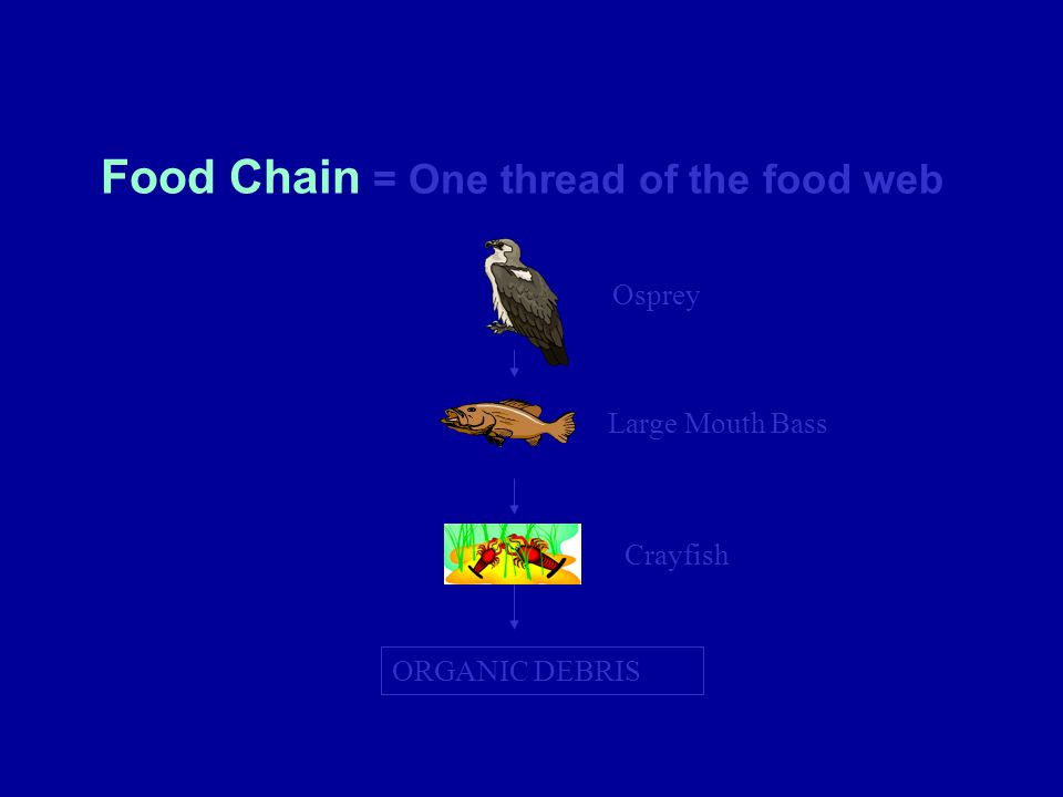 Food Chain = One thread of the food web
