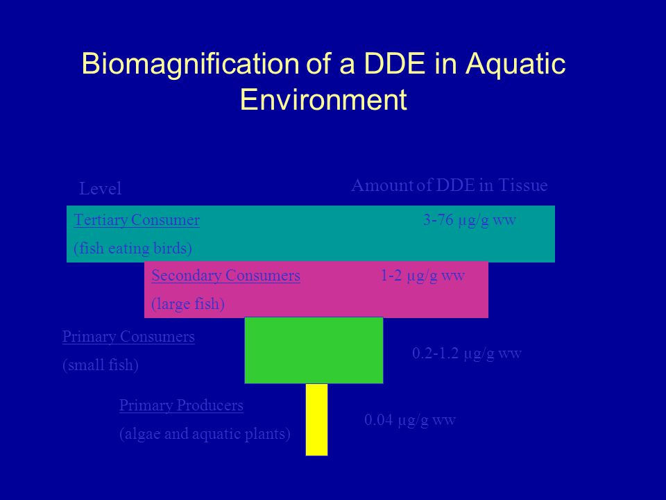 Biomagnification of a DDE in Aquatic Environment
