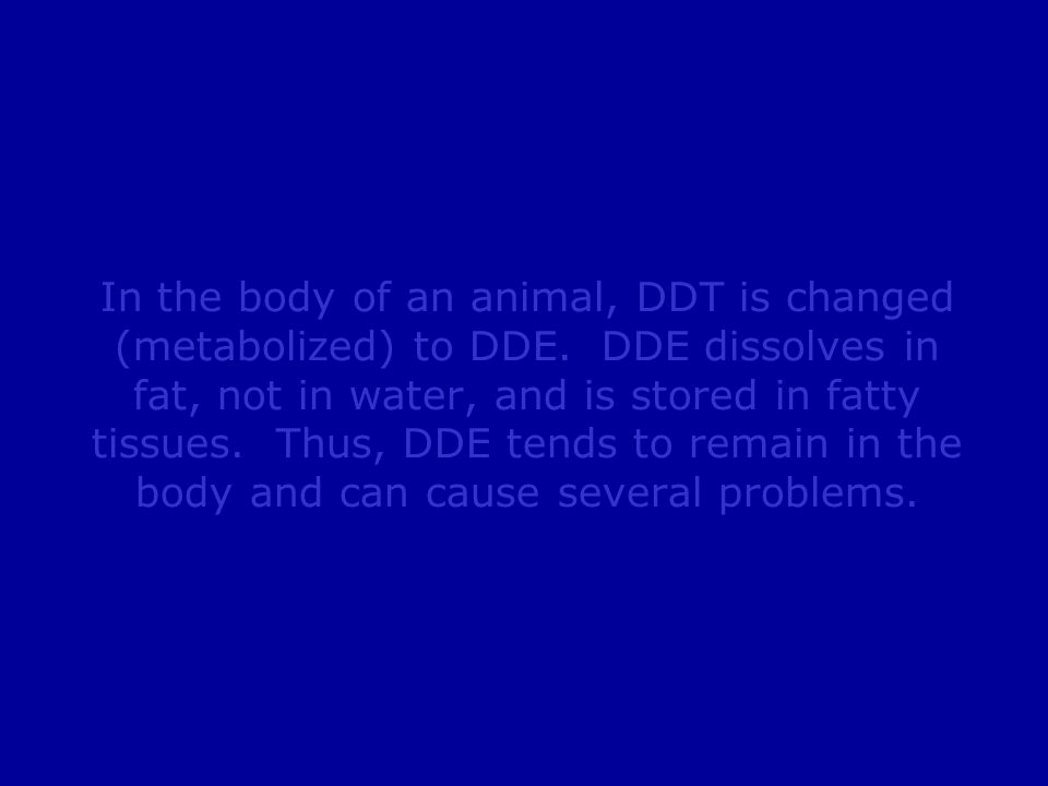 In the body of an animal, DDT is changed (metabolized) to DDE