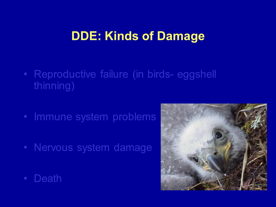DDE: Kinds of Damage Reproductive failure (in birds- eggshell thinning) Immune system problems. Nervous system damage.