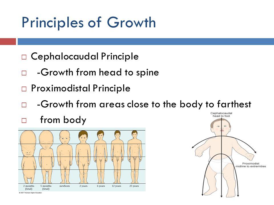 Principles of Growth Cephalocaudal Principle