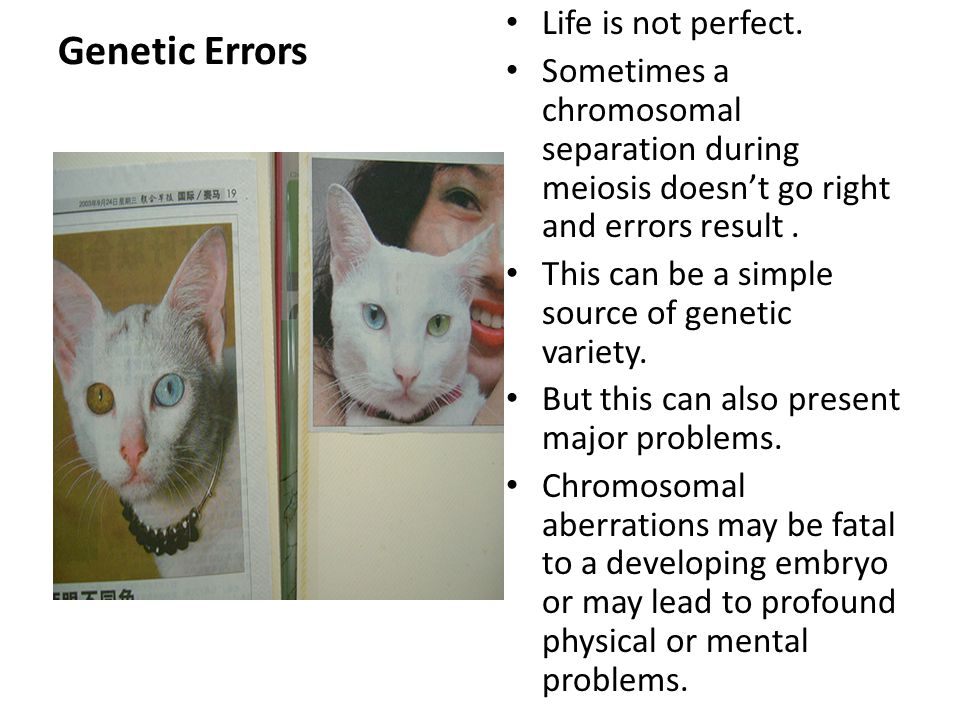 Genetic Errors Life is not perfect.
