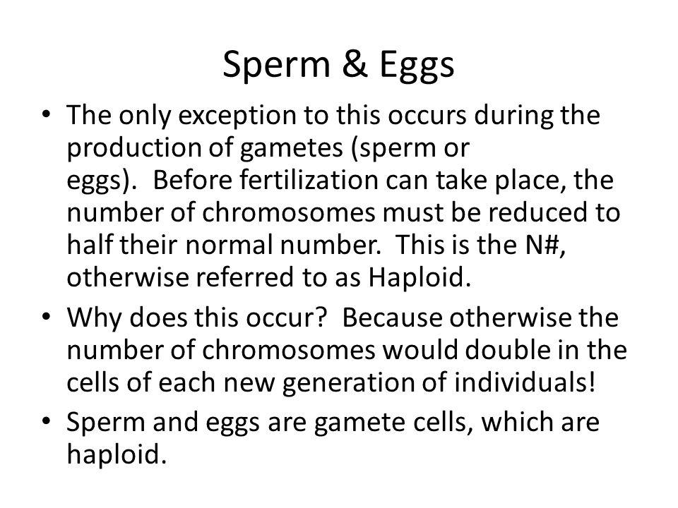 Sperm & Eggs