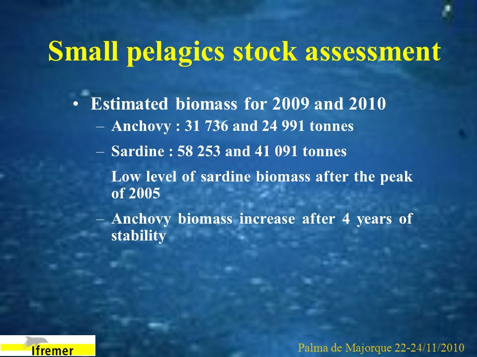 Small pelagics stock assessment