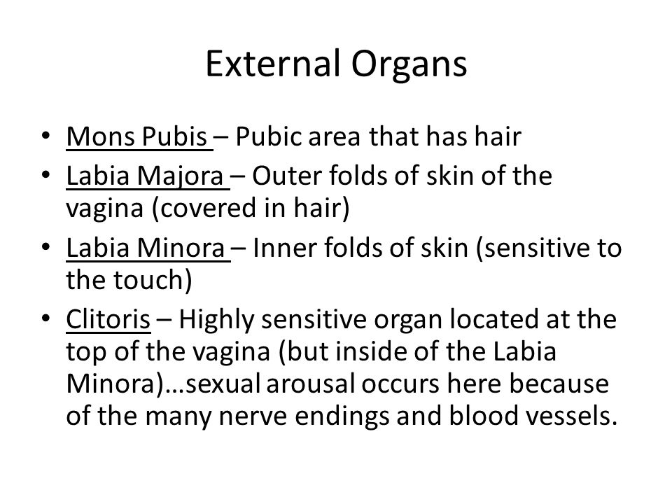 External Organs Mons Pubis – Pubic area that has hair