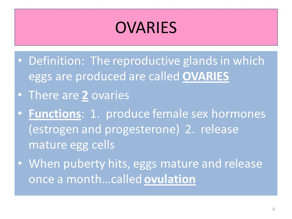 OVARIES Definition: The reproductive glands in which eggs are produced are called OVARIES. There are 2 ovaries.