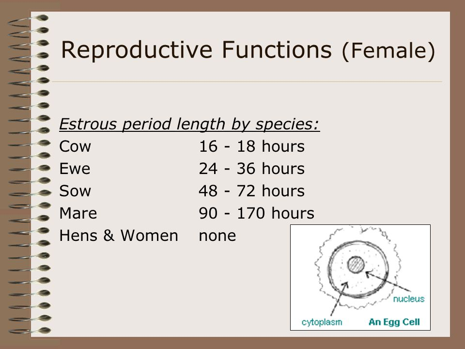 Reproductive Functions (Female)