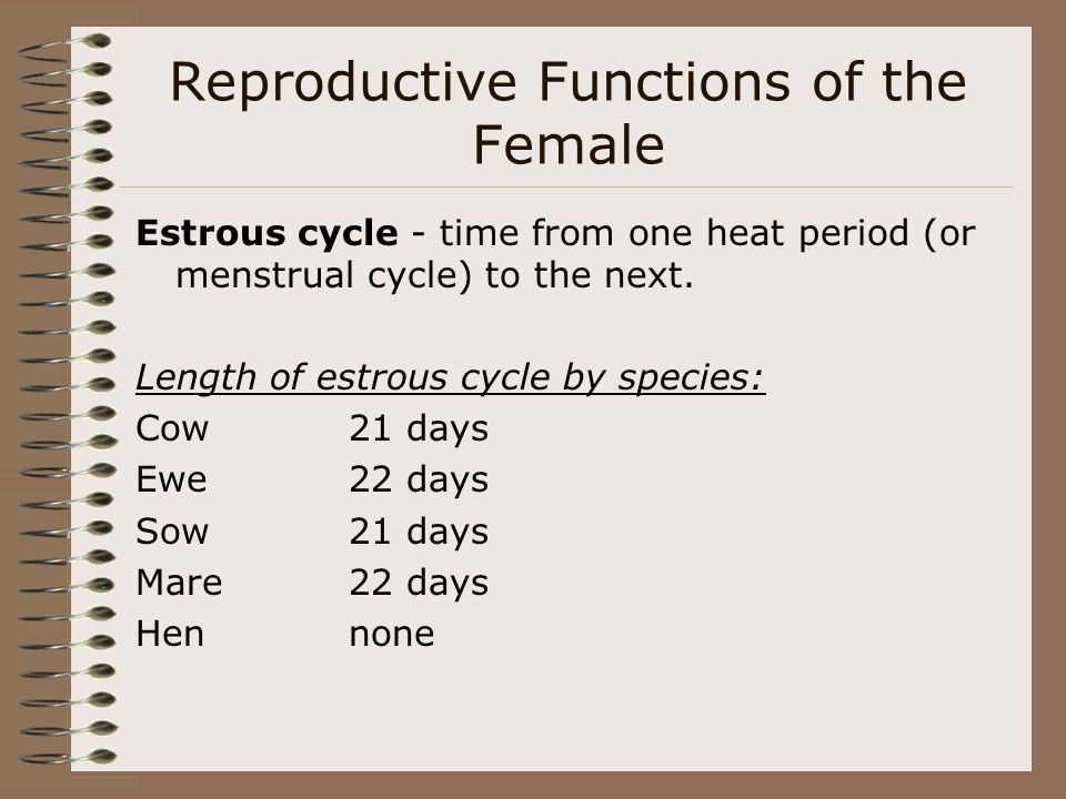 Reproductive Functions of the Female