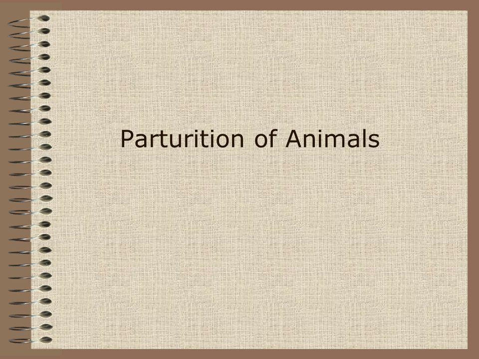Parturition of Animals