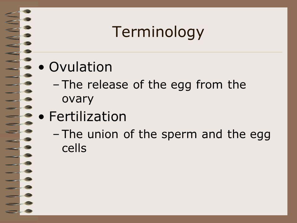 Terminology Ovulation Fertilization