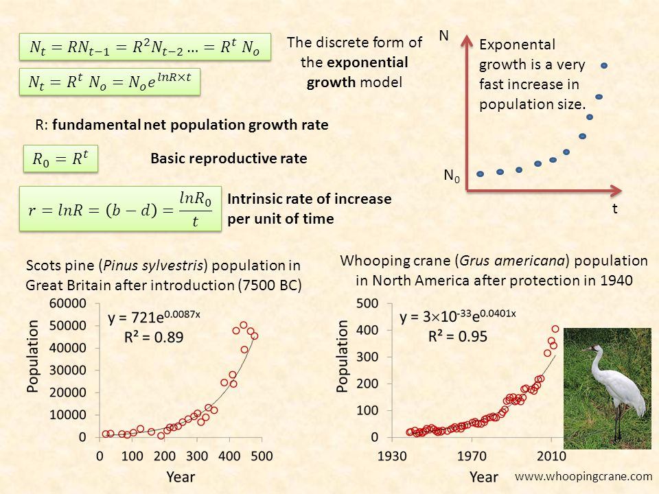 The discrete form of the exponential growth model