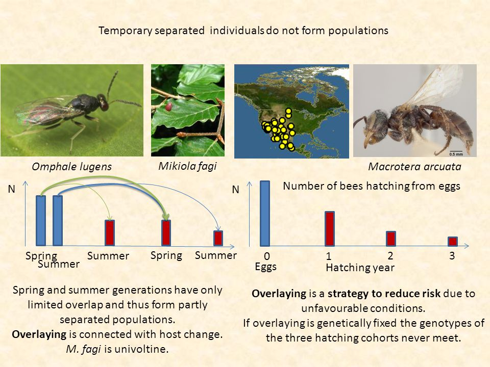 Temporary separated individuals do not form populations