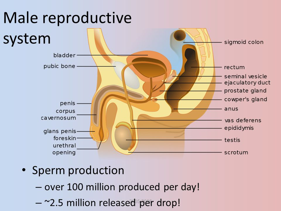 This remarkable male production sperm agree
