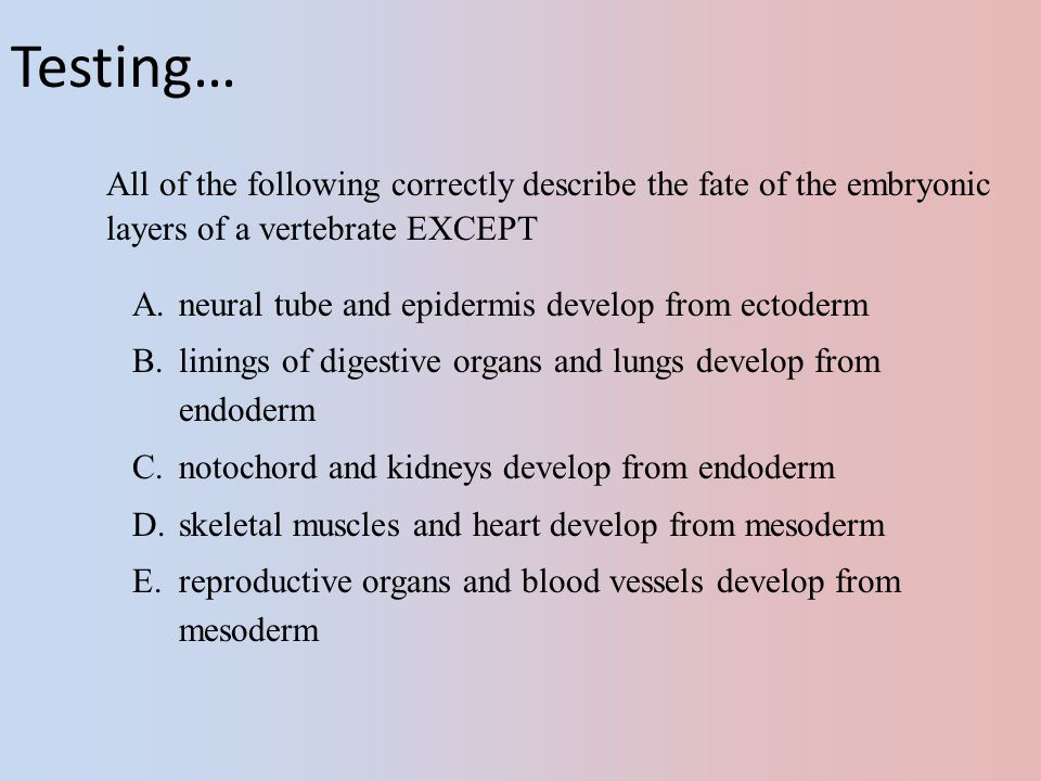 Testing… All of the following correctly describe the fate of the embryonic layers of a vertebrate EXCEPT.