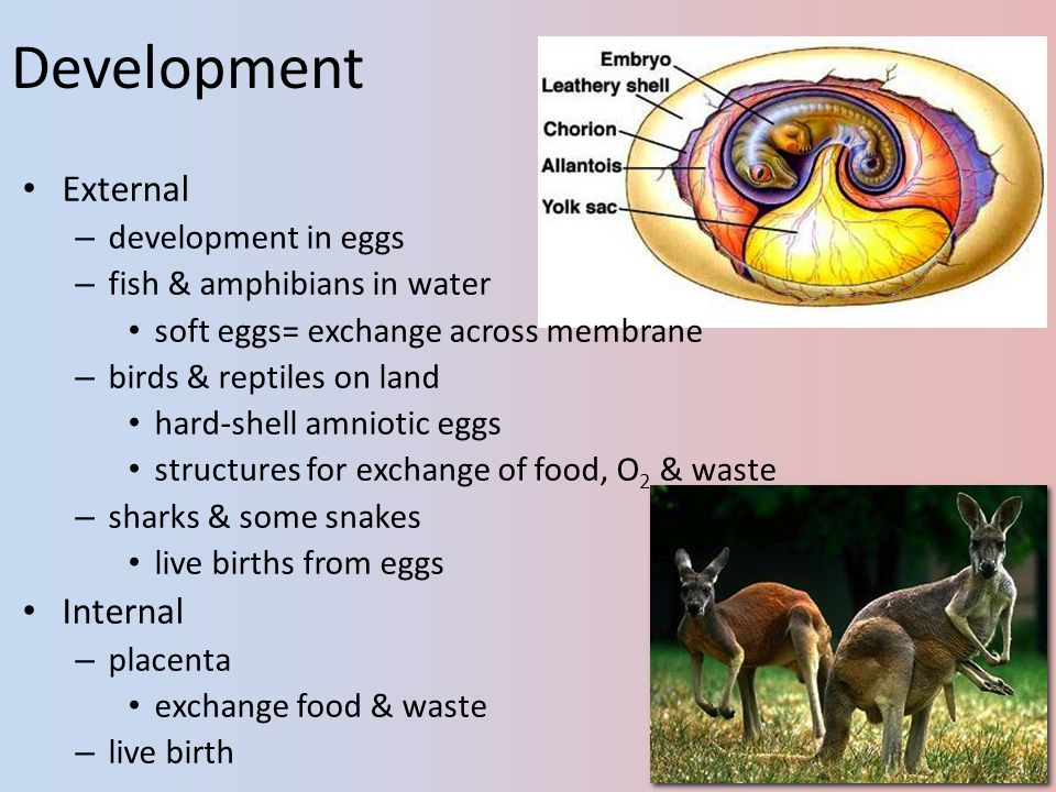 Development External Internal development in eggs
