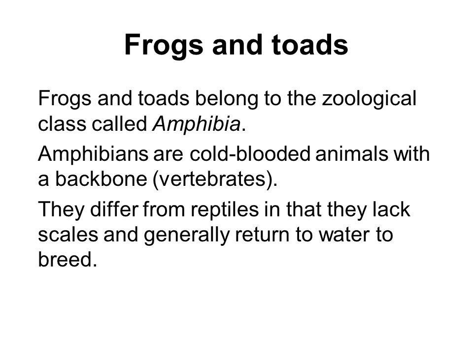 Frogs and toads Frogs and toads belong to the zoological class called Amphibia. Amphibians are cold-blooded animals with a backbone (vertebrates).