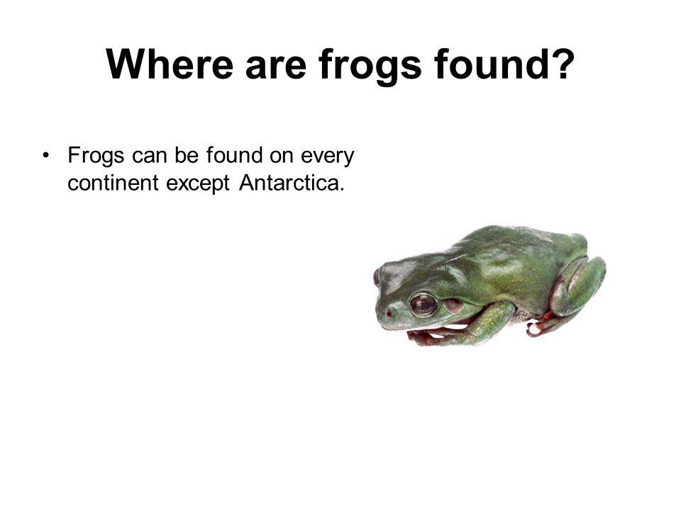 Where are frogs found Frogs can be found on every continent except Antarctica.