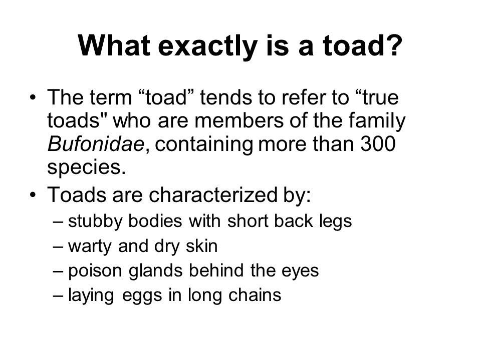 What exactly is a toad The term toad tends to refer to true toads who are members of the family Bufonidae, containing more than 300 species.