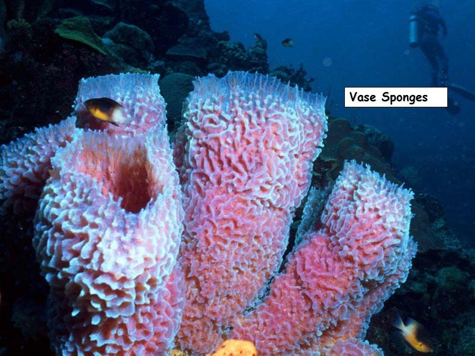 Vase Sponges