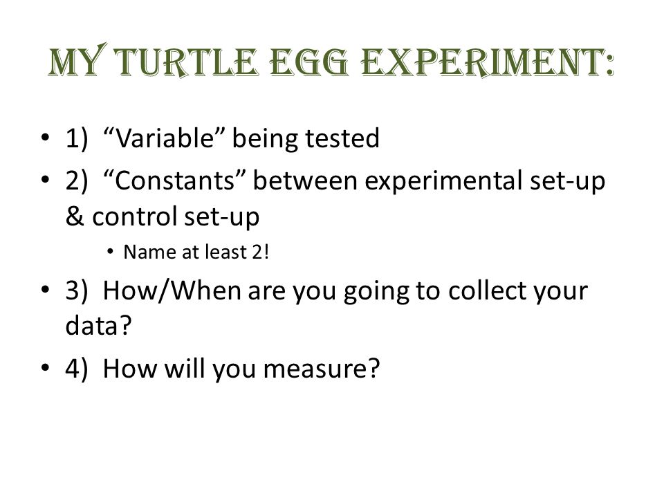 MY Turtle Egg EXPERIMENT: