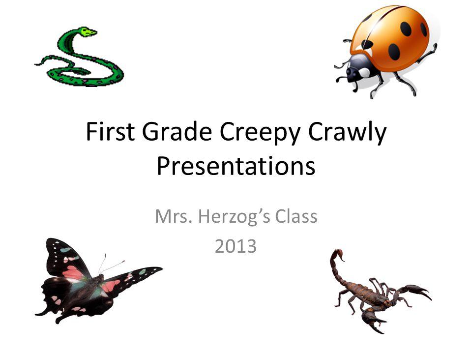 First Grade Creepy Crawly Presentations