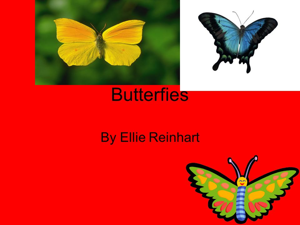 Butterfies By Ellie Reinhart