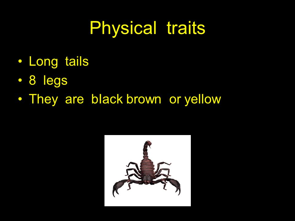 Physical traits Long tails 8 legs They are bIack brown or yellow