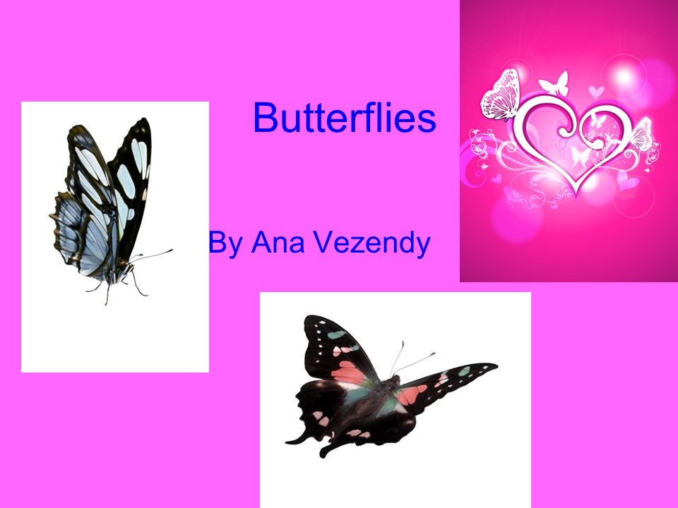 Butterflies By Ana Vezendy
