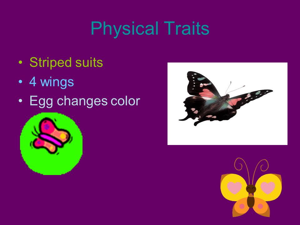 Physical Traits Striped suits 4 wings Egg changes color