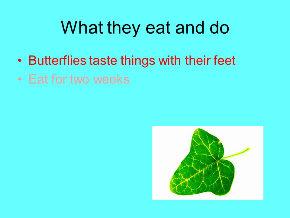 What they eat and do Butterflies taste things with their feet