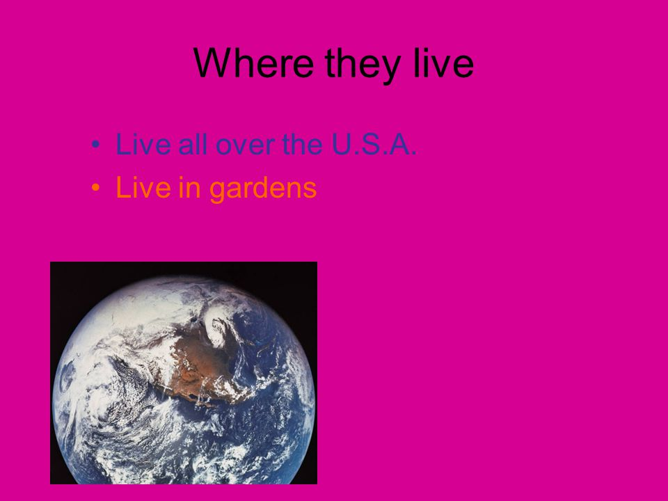 Where they live Live all over the U.S.A. Live in gardens