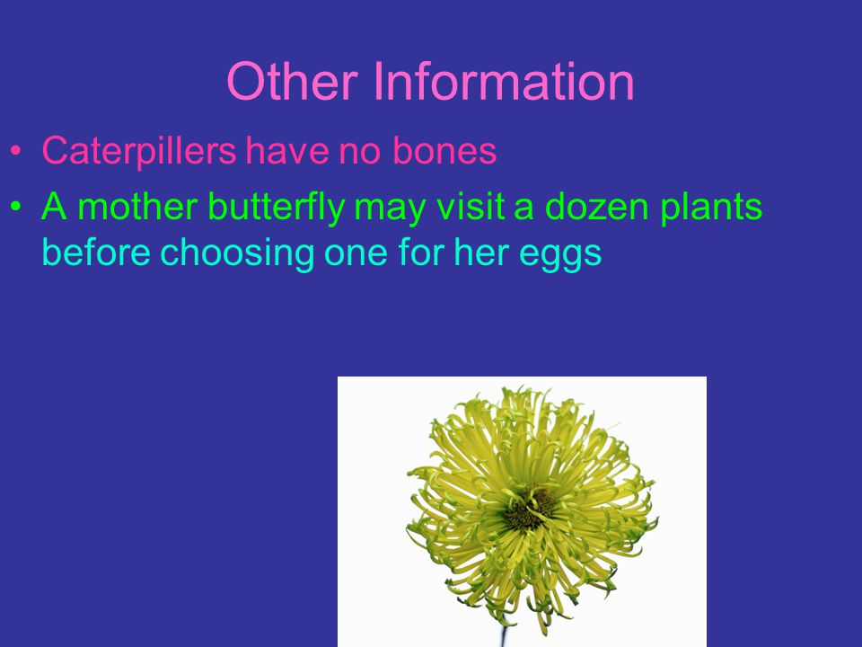 Other Information Caterpillers have no bones