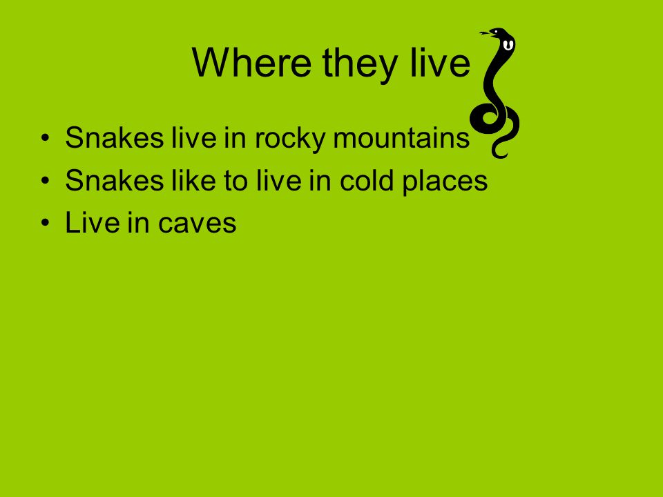 Where they live Snakes live in rocky mountains