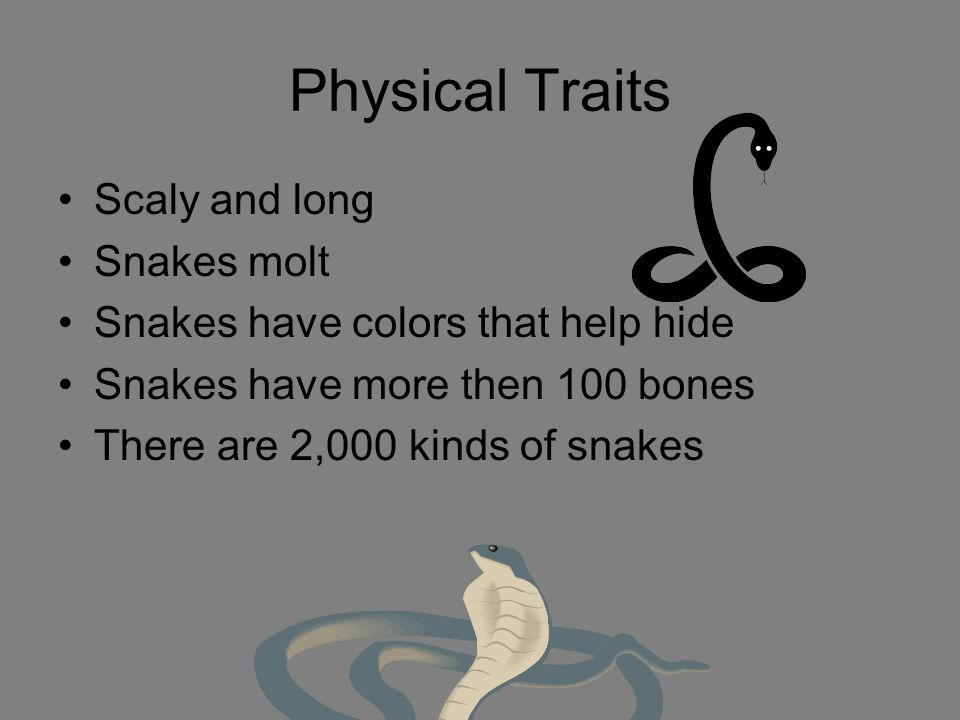 Physical Traits Scaly and long Snakes molt