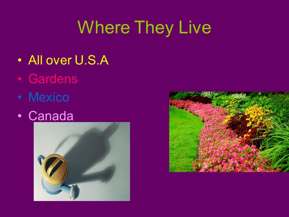 Where They Live All over U.S.A Gardens Mexico Canada