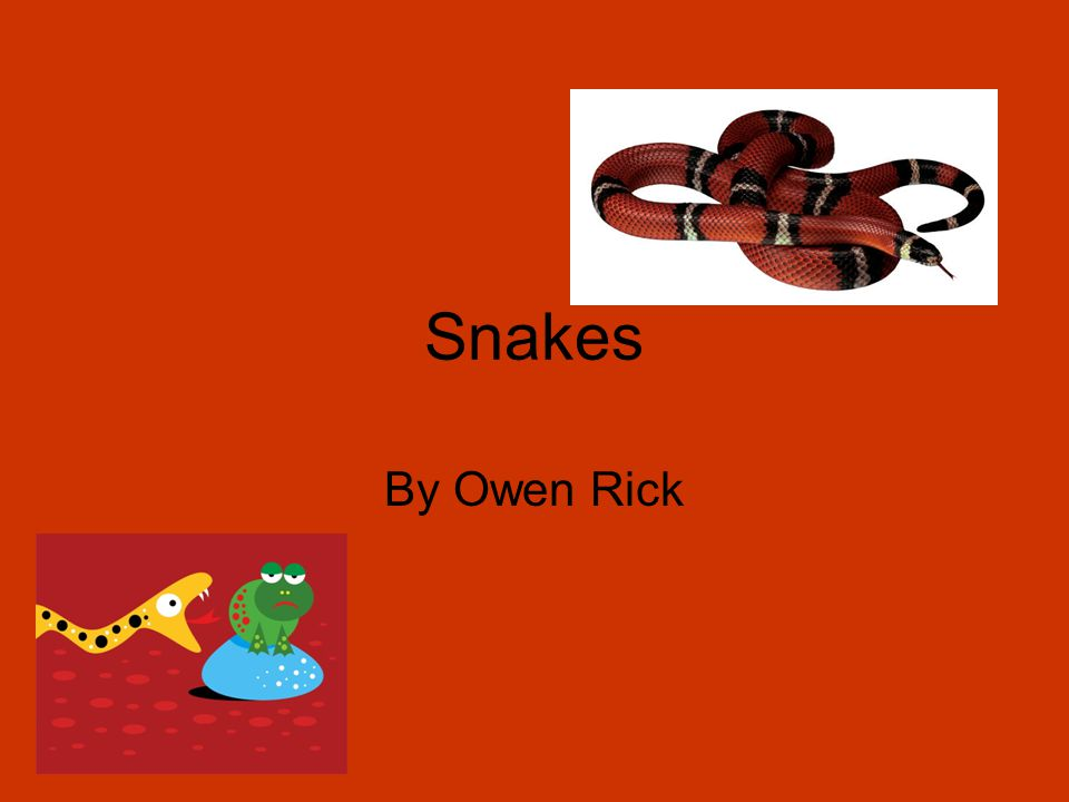 Snakes By Owen Rick