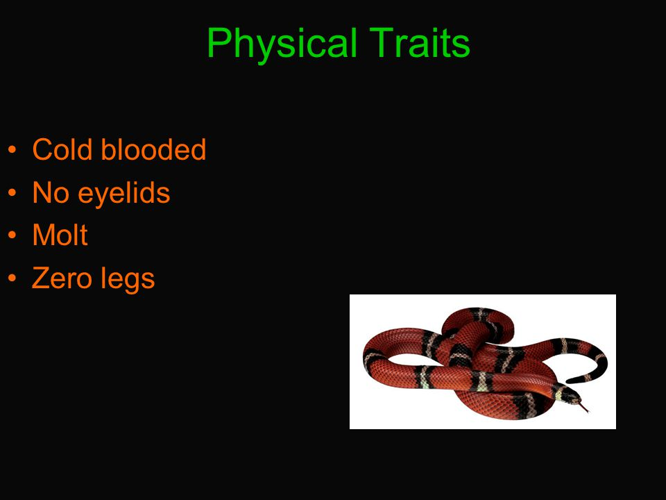 Physical Traits Cold blooded No eyelids Molt Zero legs