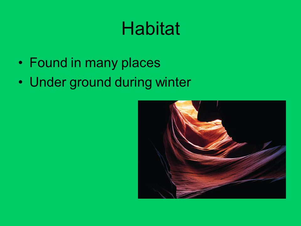 Habitat Found in many places Under ground during winter