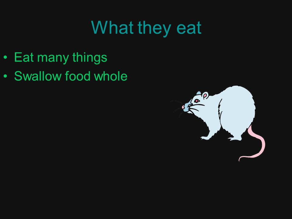 What they eat Eat many things Swallow food whole