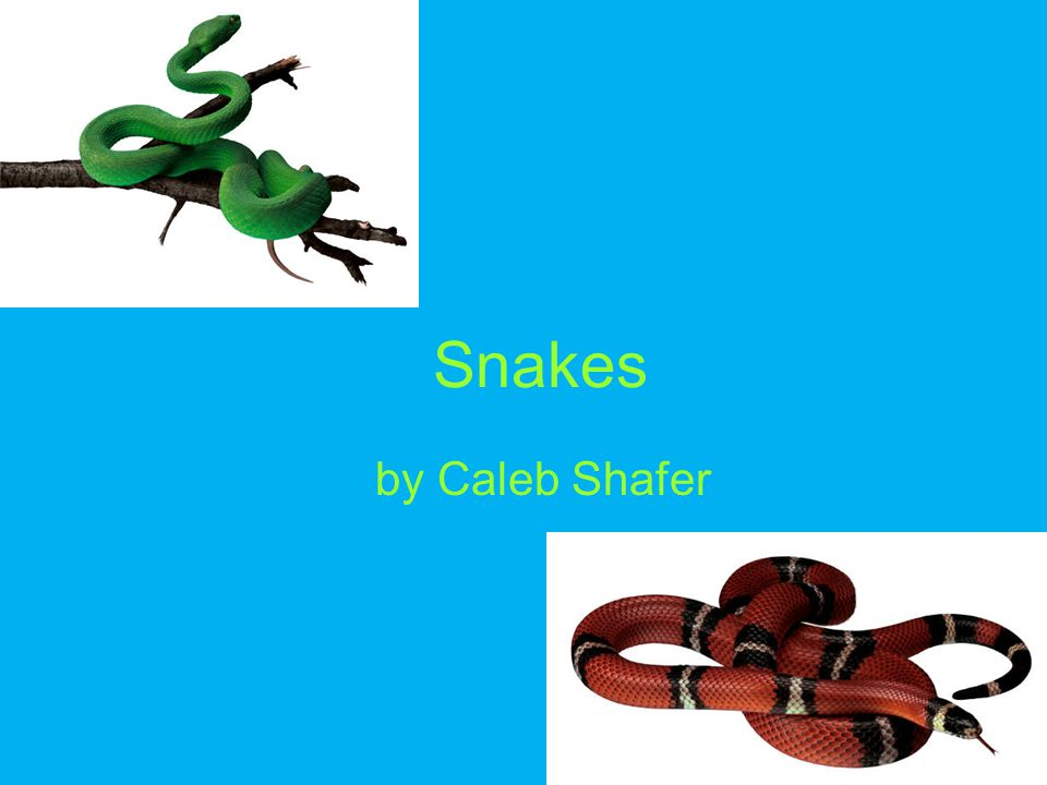 Snakes by Caleb Shafer