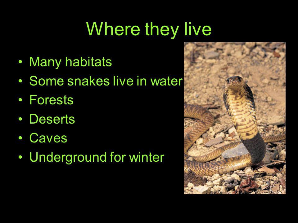 Where they live Many habitats Some snakes live in water Forests