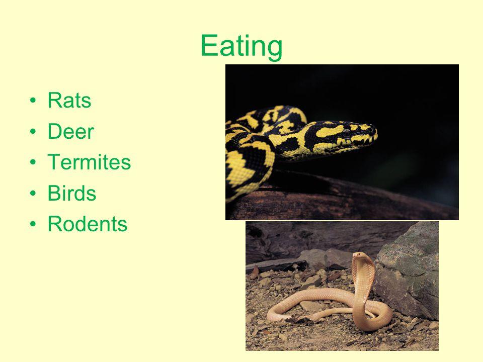 Eating Rats Deer Termites Birds Rodents